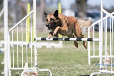NSW Southern District Country BCC - Agility - 11th Sept 2016