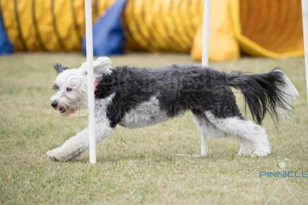 Festival of Agility - 30th October 2016