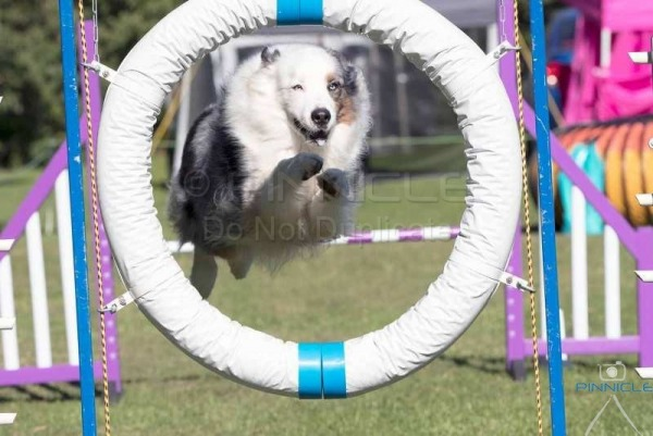 Wollongong Dog Sports Club - Agility Trial 28 May 2017