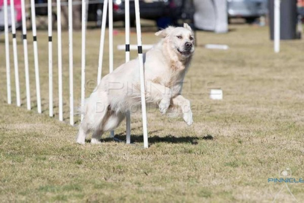 HDAC Winter Agility Trial - 5th August 2017