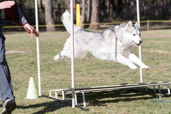 Northern Suburbs Agility - 6th August 2017
