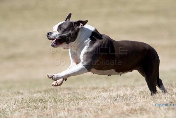 Lure Coursing - NSW Lure Coursing Association - 3rd September 2017