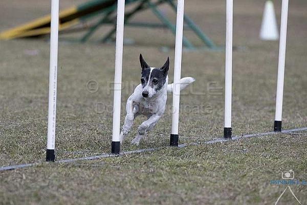 Agility - ANKC - Newcastle - 19 August 2018