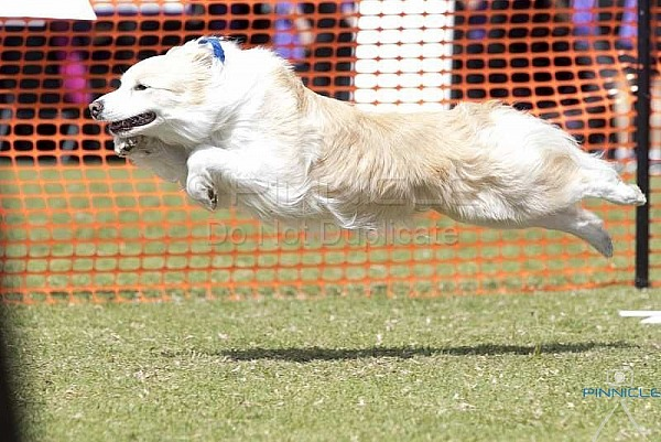 Flyball Nationals 2018 - Kiama NSW - Saturday 15 September