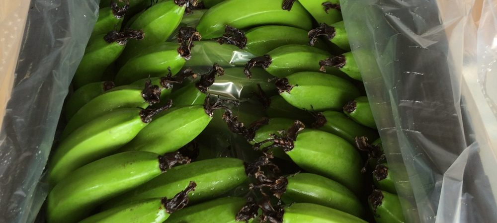 Banana industry trials re-usable crate that reduces waste