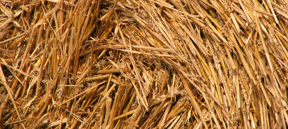 Barley straw shows potential as transport biofuel raw material