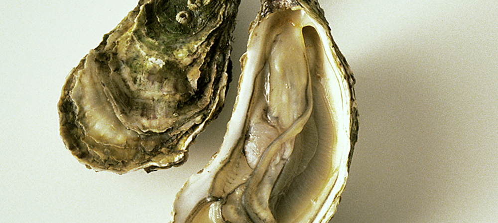 Data-driven decision-making in the oyster industry