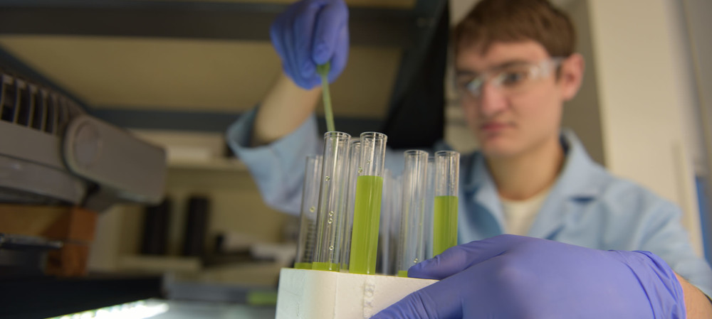 Identifying the best algae for biofuels