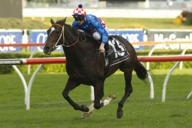 Melbourne Cup Horse - LA AMISTAD