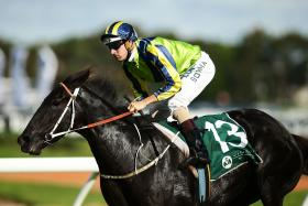 Melbourne Cup Horse - LUCIA VALENTINA