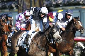 Melbourne Cup Horse - FAWKNER