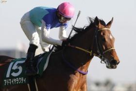 Melbourne Cup Horse - ADMIRE RAKTI