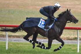 Melbourne Cup horse - PROTECTIONIST