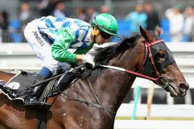Melbourne Cup Horse - SIGNOFF