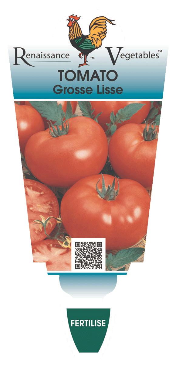 Tomato \'Grosse Lisse\' — Renaissance Herbs