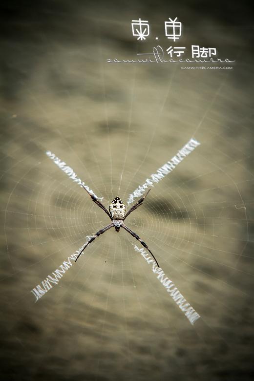 吴哥窟 Angkor Wat Spider