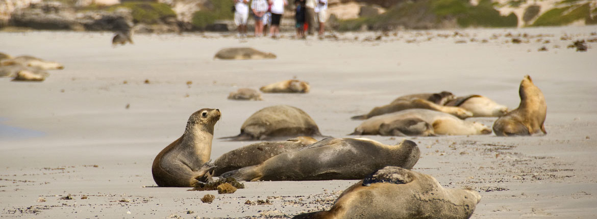 sealbay-with-tourists