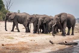 Chobe, Botswana img_0054