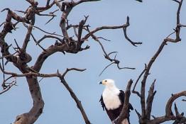 Chobe, Botswana img_0070