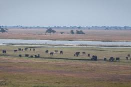 Chobe, Botswana img_0302