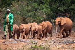 D. Sheldrick Wildlife Trust, Kenya img_6679