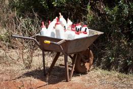 D. Sheldrick Wildlife Trust, Kenya img_6722