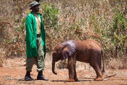 D. Sheldrick Wildlife Trust, Kenya img_6833