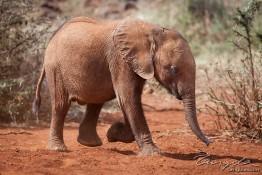 D. Sheldrick Wildlife Trust, Kenya img_7082