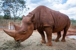 D. Sheldrick Wildlife Trust, Kenya img_7183
