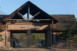 Masai Mara NP, Kenya img_7487