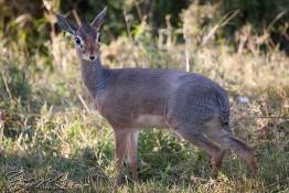 Masai Mara NP, Kenya img_7527