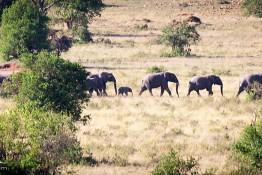 Masai Mara NP, Kenya img_7578
