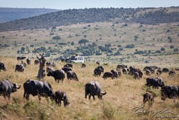 Masai Mara NP, Kenya img_7656