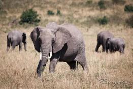 Masai Mara NP, Kenya img_7699
