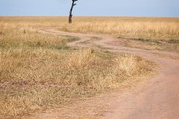 Masai Mara NP, Kenya img_7791