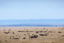 Masai Mara NP, Kenya img_7808