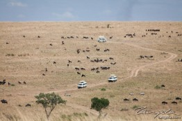 Masai Mara NP, Kenya img_7839