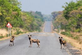 Kafue NP, Zambia img_8833