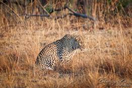 Kafue NP, Zambia img_9109