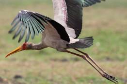 Chobe, Botswana img_9789
