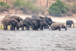 Chobe, Botswana img_9865