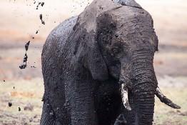 Chobe, Botswana img_9970