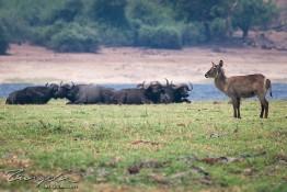 Chobe, Botswana img_9990