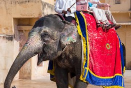 Jaipur, India nv0a7566