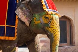 Jaipur, India nv0a7574