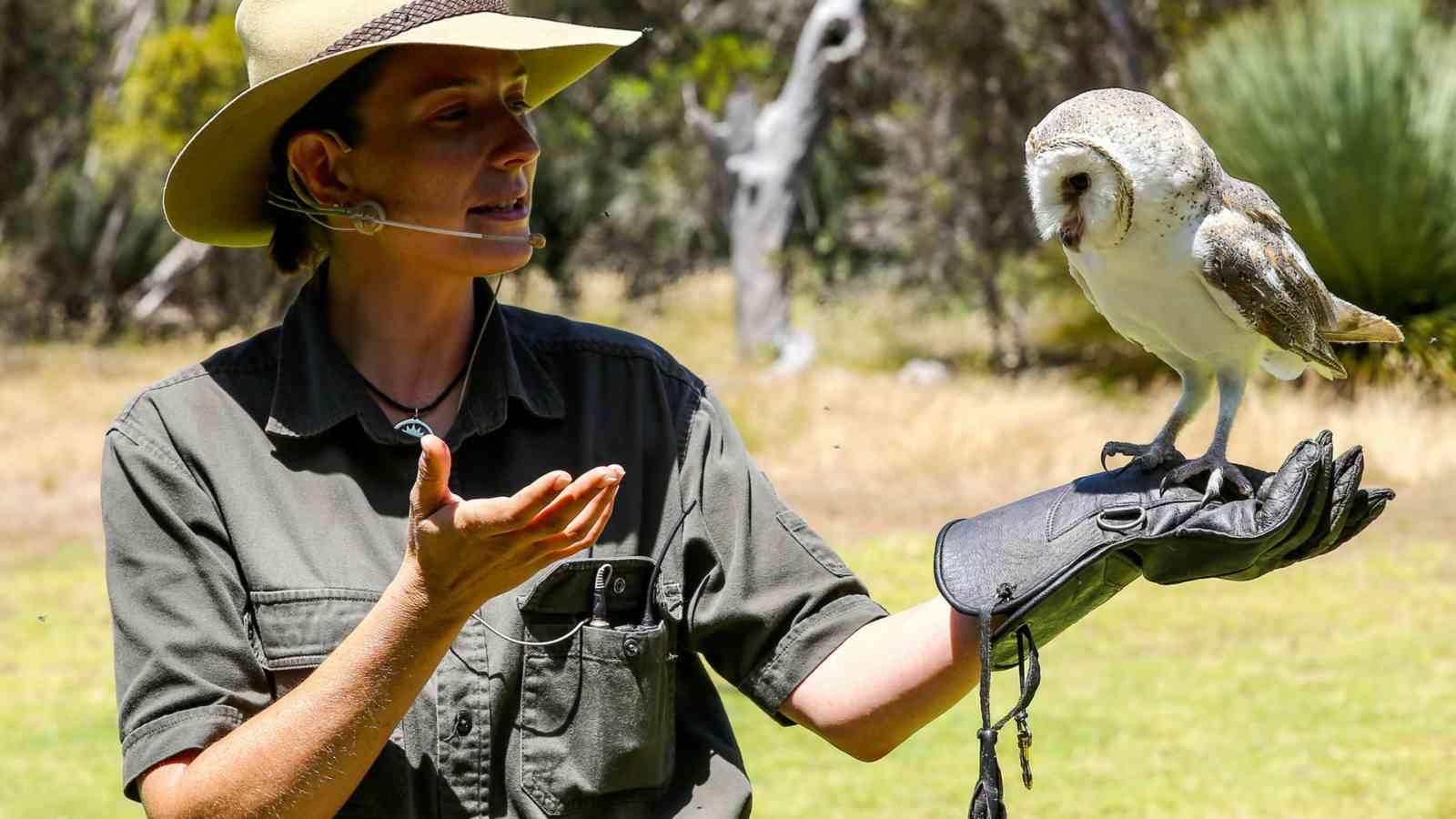 Kangaroo Island Raptor Domain