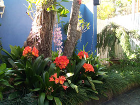 Garden Ideas Brisbane plan to plant - garden design services - brisbane's best garden