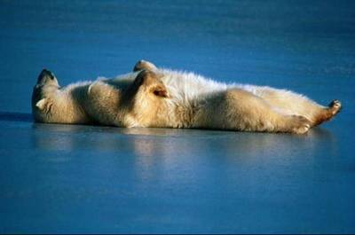 This-is-how-to-relax.jpg (400×265)