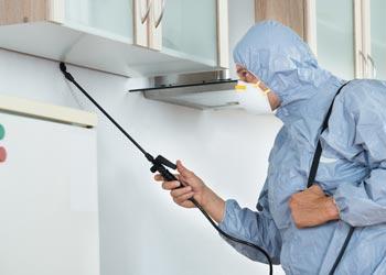 7 Home Maintenance Musts Pest Contril