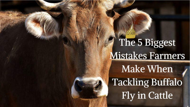 The 5 Biggest Mistakes Farmers Make When Tackling Buffalo